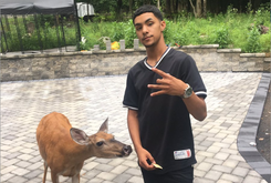 Pennsylvania Teen Has Befriended A Herd Of Deer To Play Basketball With