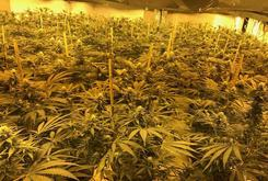 $1.2 Million In Weed Found In Old Cold War Bunker