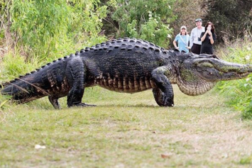 Footage Of Unbelievably Huge Florida Alligator Goes Viral